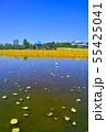 春の東京都上野公園の不忍池 55425041