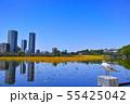 春の東京都上野公園の不忍池 55425042