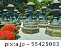 新緑の東京都上野公園の石灯籠の列 55425063