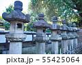 新緑の東京都上野公園の石灯籠の列 55425064