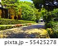 新緑の東京都上野公園の遊歩道 55425278