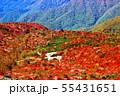 紅葉の那須山「姥が平」 55431651