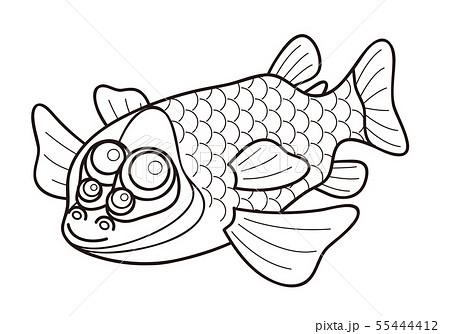 デメニギス 深海魚 キャラクター ぬりえ イラスト 55444412