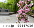 branches of flowering plum in city park 55447036
