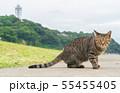 江ノ島と猫 55455405