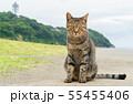 江ノ島と猫 55455406