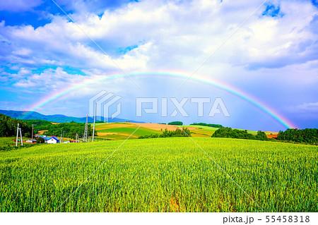 畑作風景にかかる虹の橋 士別市 55458318