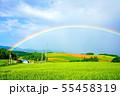 畑作風景にかかる虹の橋 士別市 55458319