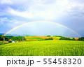 畑作風景にかかる虹の橋 士別市 55458320