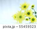 菊の花 55459323