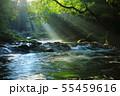 光芒の出る夏の菊池渓谷No.5 55459616