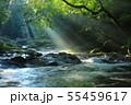 光芒の出る夏の菊池渓谷No.3 55459617