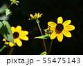 ルドベキア・タカオ 55475143