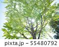 夏 木 陽 緑 猛暑 夏日 気候 55480792