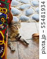 屋外のテーブル下でくつろぐネコ 55481934