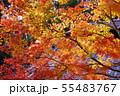 京都正法寺の秋 55483767