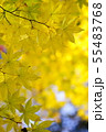 黄金色の秋1 55483768