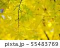 黄金色の秋2 55483769
