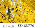 黄金色の秋3 55483770