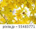 黄金色の秋4 55483771