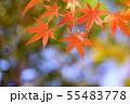 秋・日本の美 55483778