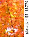 日本の美・秋1 55483779