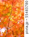 日本の美・秋2 55483780