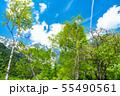 《長野県》新緑の上高地 55490561