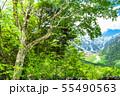 《長野県》新緑の上高地 55490563