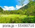 《長野県》新緑の上高地・岳沢湿原 55490710