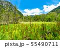 《長野県》新緑の上高地・岳沢湿原 55490711