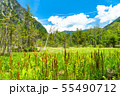 《長野県》新緑の上高地・岳沢湿原 55490712