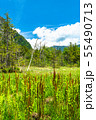 《長野県》新緑の上高地・岳沢湿原 55490713