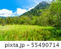 《長野県》新緑の上高地・岳沢湿原 55490714