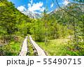 《長野県》新緑の上高地・岳沢湿原 55490715