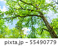 《長野県》新緑の上高地 55490779