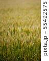 麦畑 55492575