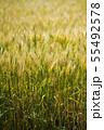 麦畑 55492578