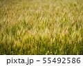 麦畑 55492586