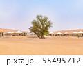 ワヒバ砂漠(オマーン、ワヒバ・サンズ) 55495712