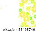 輪切りシトラスのイラスト背景 55495749