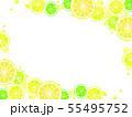 輪切りシトラスのイラスト背景 55495752