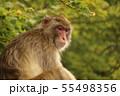 猿 55498356