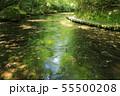 夏の岳切渓谷No.8 55500208