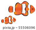 クマノミの親子 イラスト Anemone Fish 55506096