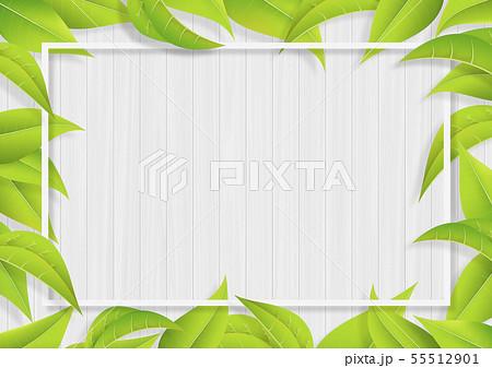 グリーン-葉っぱ-リーフ-フレーム-新緑-白木 55512901