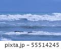 御前崎海岸の波 55514245
