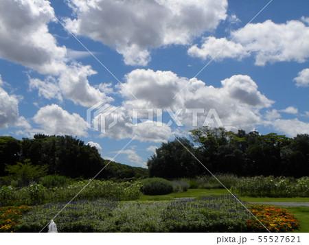 梅雨明けの青空と白い雲 55527621
