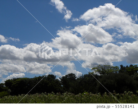 梅雨明けの青空と白い雲 55528141