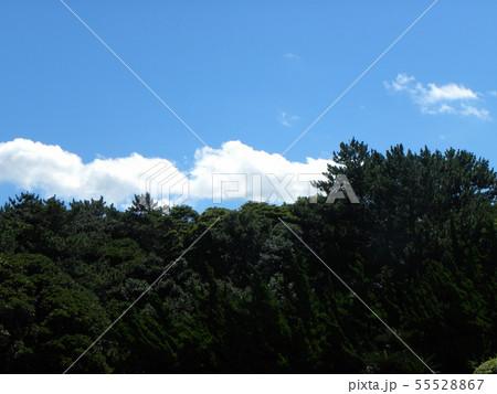 梅雨明けの青空と白い雲 55528867
